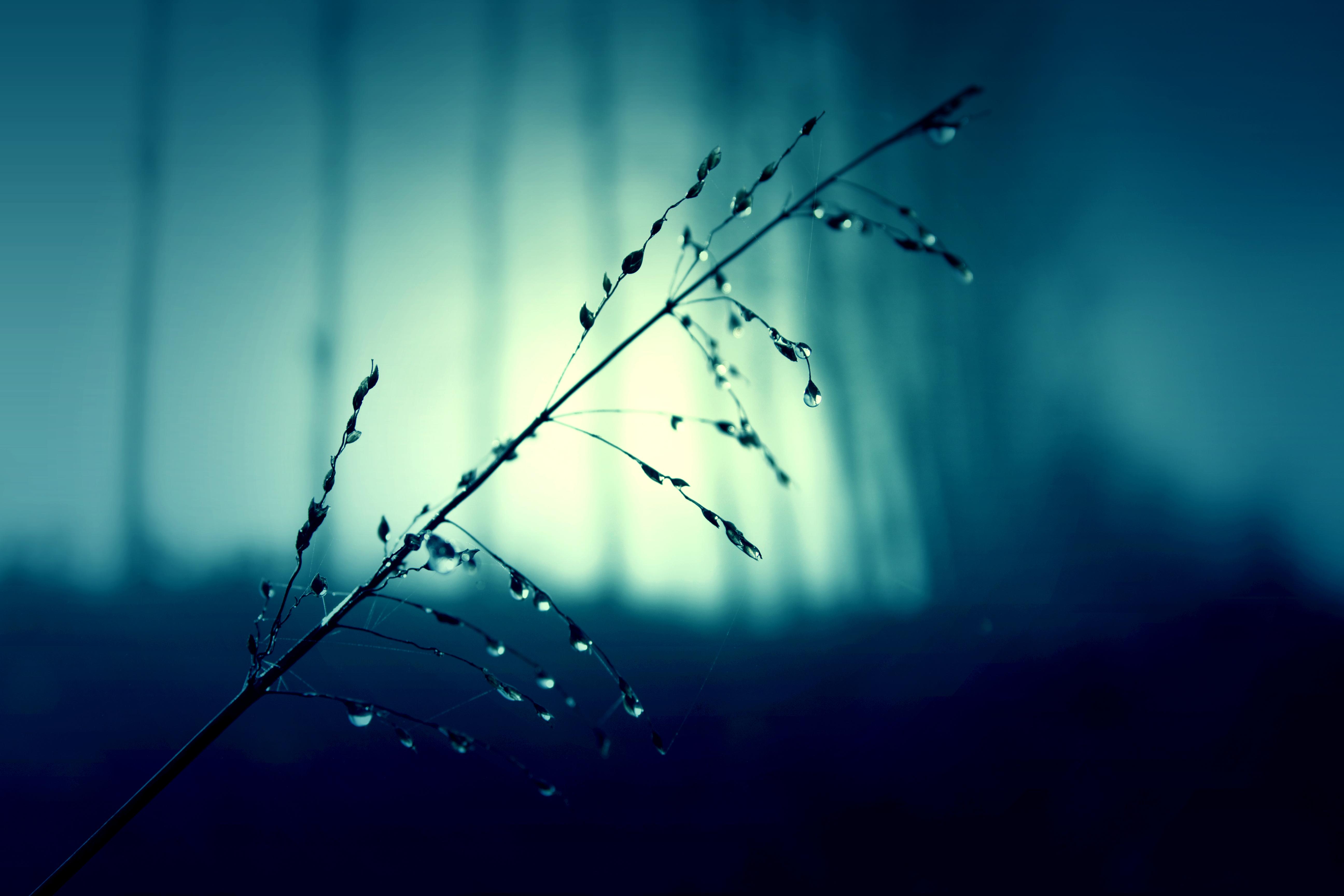 strå med regn